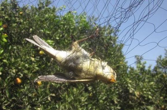 птахи Кіпр