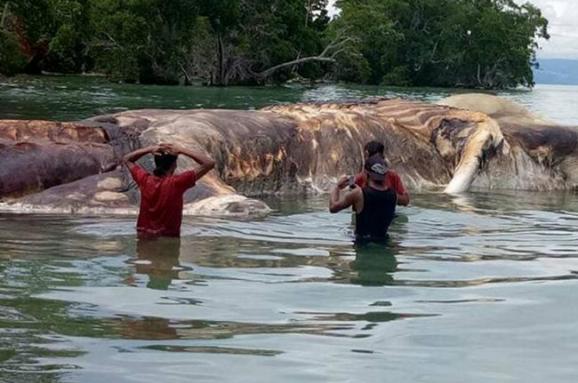 В Індонезії наберег викинуло 35-тонну морську істоту