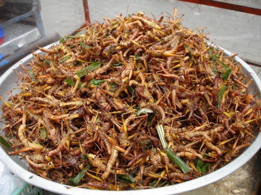 10 самых мерзких блюд мира