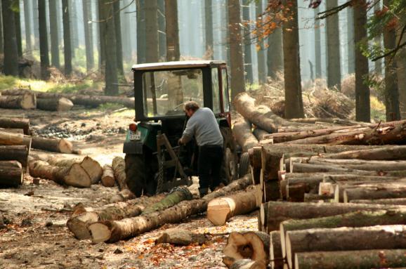 Порошенко: Усі лісокористувачі, щопродають деревину вУкраїні, зобов'язані запровадити електронний облік