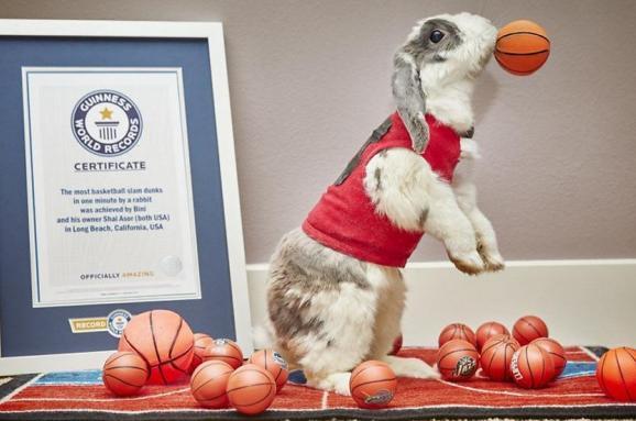 Кролик-баскетболіст потрапив у Книгу рекордів Гіннеса