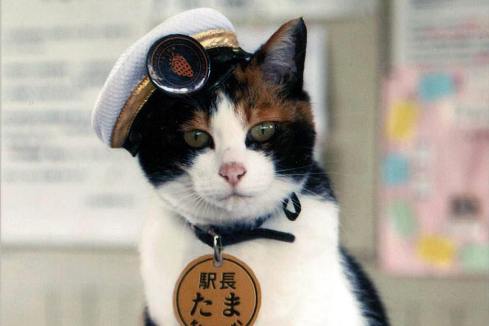 Усатая начальница железнодорожной станции и пушистый синоптик. 5 котов, которые работают не меньше людей