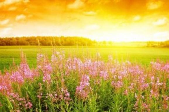 Летнее Солнцестояние – день силы и магии. Интересные приметы и ритуалы для счастья
