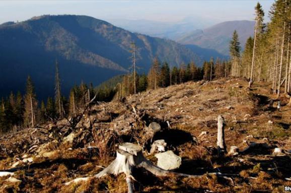 Контрабанда леса. Почему незаконно вырубают Карпаты и как это хотят изменить