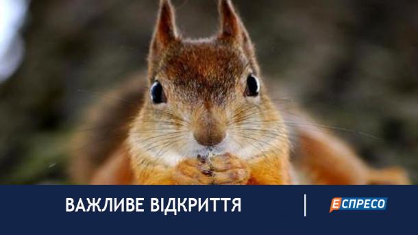 В Польше белки свили себе гнездо в труппе человека, который свисал с дерева