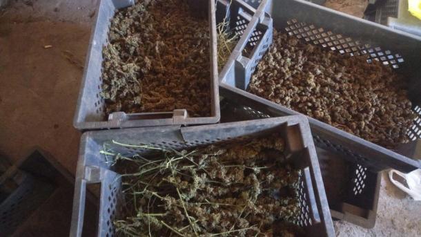 На Херсонщине полиция изъяла 18 кг марихуаны на 800 тысяч гривень