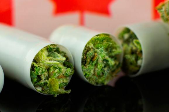 Курению марихуаны толстовка с коноплей