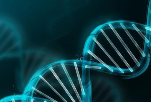 """Результат пошуку зображень за запитом """"генетика"""""""