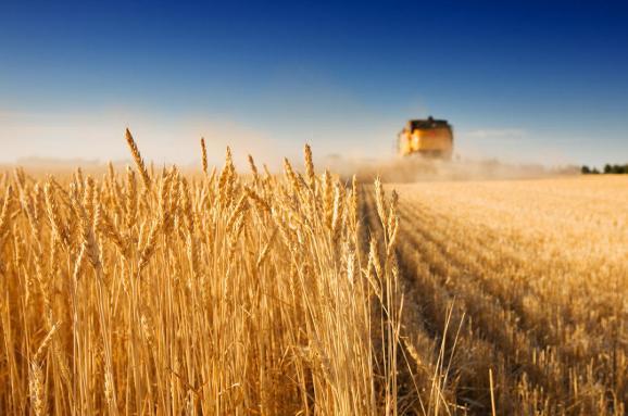 Не гречкосеи, продаем улиток, покупаем сало. 8 мифов об украинском сельском хозяйстве