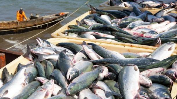 Украина увеличила экспорт рыбы почти на 70%