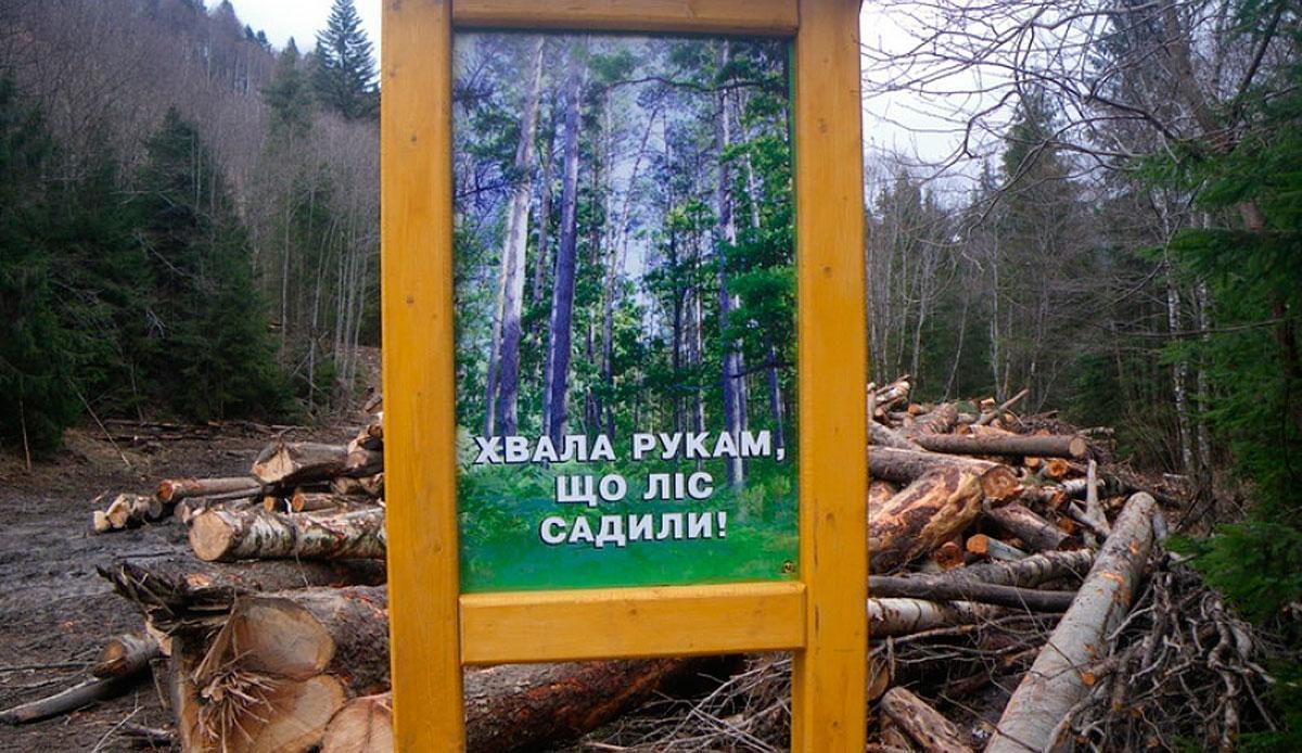 На території Кутського лісгоспу виявлено незаконну рубку на суму понад 880 тисяч гривень
