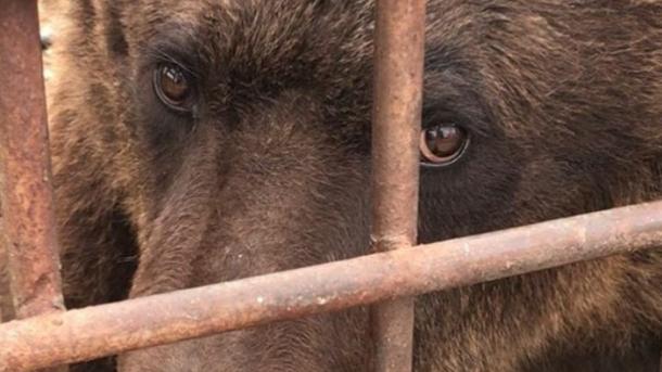 """Из частного """"зоопарка смерти"""" в Покровске на Донетчине спасли медведей и львов"""