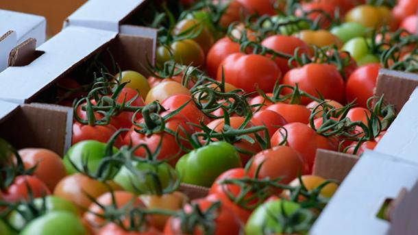 Украина существенно нарастила экспорт тепличных овощей