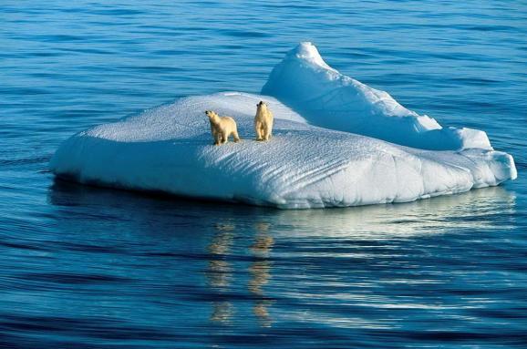 Північний Льодовитий океан може залишитися без льоду вже через 20 ...
