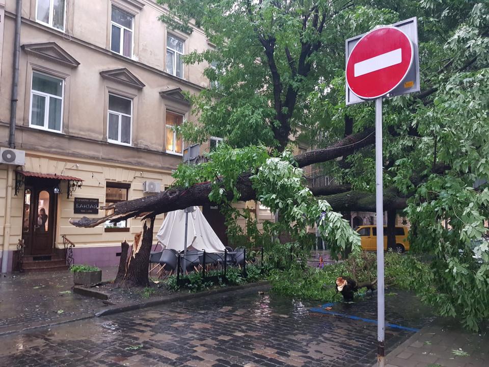 Вулиця Чайковського перекрила зламаним деревом. Фото: Facebook Василя Хомина