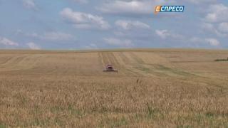 В 2015 году аграрии обеспечили 12% ВВП Украины