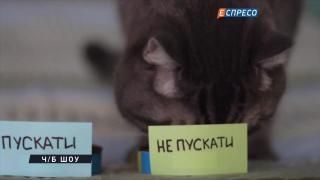 Пускати чи не пускати російських артистів до України? Експертна думка кота