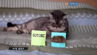 Що впливає на дурні рішення Путіна? Ботокс чи вуса Пєскова? Відповідь знає Том Йорк.