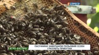 Агро-Експрес | Пасічники завершили польовий сезон і готуються до зимівлі бджіл