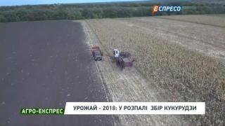 Борщовий набір: урожай в коморі, але ціни повзуть вгору