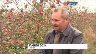 Агро-Експрес | Яблучний мега-врожай: фермери бідкаються на низькі ціни