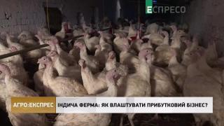 Агро-Експрес | Індича ферма: як влаштувати прибутковий бізнес