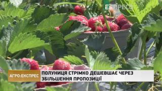 Агро-Експрес | Мор бджіл: пасічники звинувачують аграріїв! Чи справедливо?
