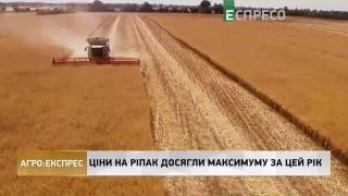 Агро-Експрес | Розпал жнив: врожай не гірший за торішній