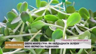 Агро-Експрес   Овочі мікро-грін: як обладнати зелену міні-ферму на підвіконні